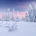 V zimním království