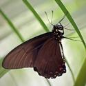 Motýl od Diany
