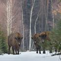 letošní zima v přírodě (3)