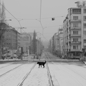 Zimní neděle