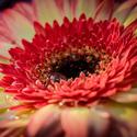 Květ pro Anděla.....