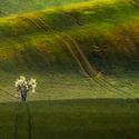 Moravské toskánsko