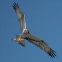 Báječný pták s kaprem č. 2
