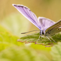 ještě nějaké motýle