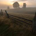Mlžný východ v pastvinách
