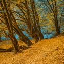 Jaké barvy skrývá podzim