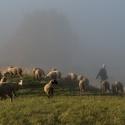 Pastier z Jasena