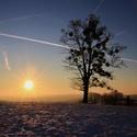 Strom na Velké Lhotě