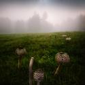 Vzpomínka na houbařskou sezónu