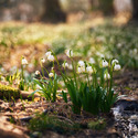 Jaro probouzí les