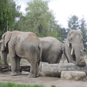 Sloní pohoda
