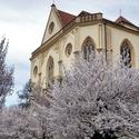 třešně u sv.Jakuba