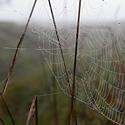pavoučí perlová krajka