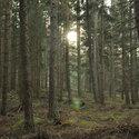 Odpolední les