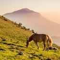 Horská pastvina