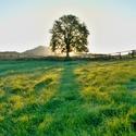 Východ slunce na pastvinách pod dubem