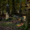 Usinající les