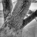 Strom u rybníka