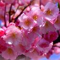 něha květů.......