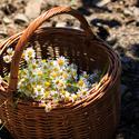 Jarní košík