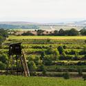Strážci vinic