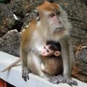 Žebračka s dítětem