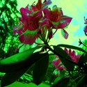 kvetinka u bloku