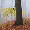 Podzim platí listím svoji útratu