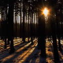 Západ slunce v tichém lese...