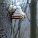 Huba na strome