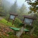 Vzpomíka na podzim