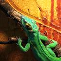 Cosi zeleného :-)