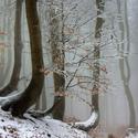 ...ve spícím krušnohorském lese