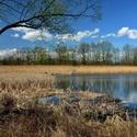 Rybník Velký Budní 2