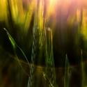 Obilné světlo