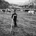 Mladý pastier