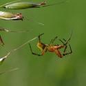 barevný pavouček 2