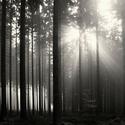 Probouzení lesa