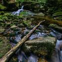 Potok v Jedlovém dole