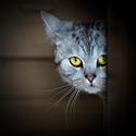 já tě vidím