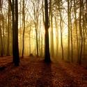 Když v lese svítá