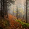 Temná podzimní cesta