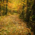 Podzim IV