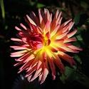 Pozdní květ