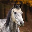 Kůň v podzimu
