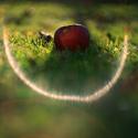 Ĺegendární ohnivý kruh pancolaru sevřel jablko