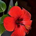 Obyčejný květ