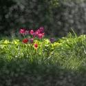 Květiny za vodní stěnou