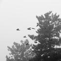 Hičkokovi ptáci 3