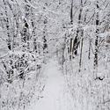 Cesta lesem, když je sníh v převaze.